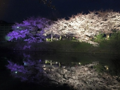 舞鶴公園の福岡城さくらまつり日程