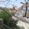 福岡の舞鶴公園で花見