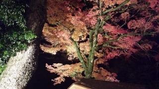 竈門神社の紅葉の見ごろ時期