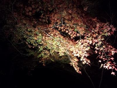竈門神社の紅葉2016の見ごろは?ライトアップの時間や時期は?太宰府の紅葉スポット