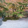 太宰府の光明禅寺の紅葉状況