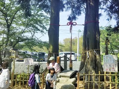 武雄神社の縁結びスポットの夫婦檜