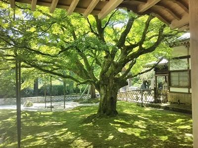 糸島の雷山千如寺大悲王院の中から見た庭園