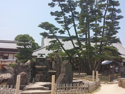 宮島大願寺の九本松