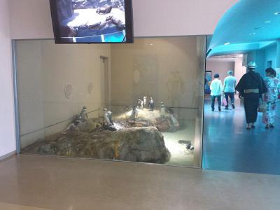 宮島水族館のペンギンとイベント