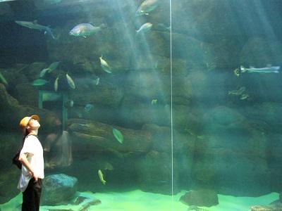 宮島水族館の水槽