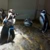 宮島水族館の見どころとイベント