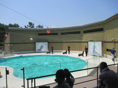 宮島水族館のアシカショー
