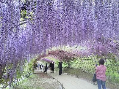 福岡の春のおすすめ記事