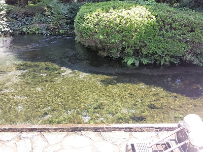 南阿蘇の白川水源の水