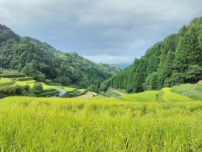 つづら棚田からの景色