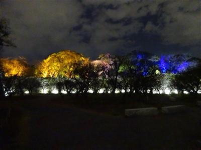 舞鶴公園から見えるチームラボ福岡城跡光の祭2019-2020